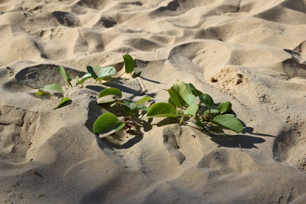 出雲大社と砂の御守り